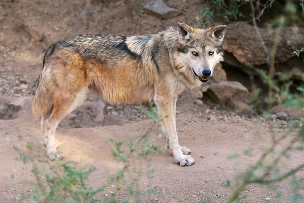 Tucson-20121211-034