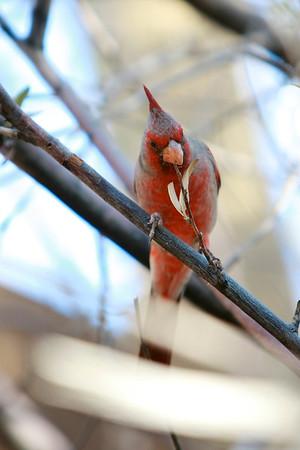 Tucson-20121211-007