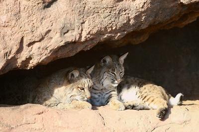 Tucson-20121211-018