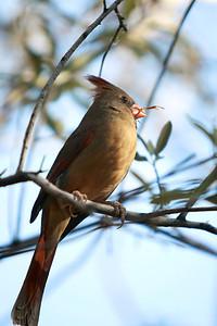 Tucson-20121211-008