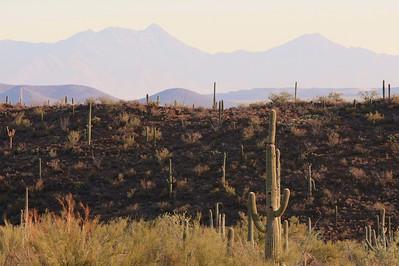 Tucson-20121211-037