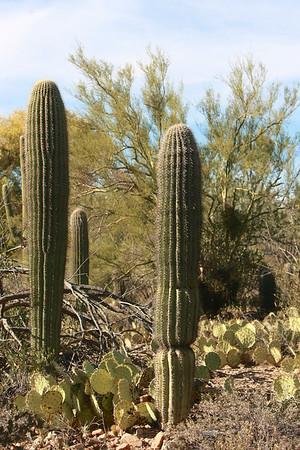 Tucson-20121211-012