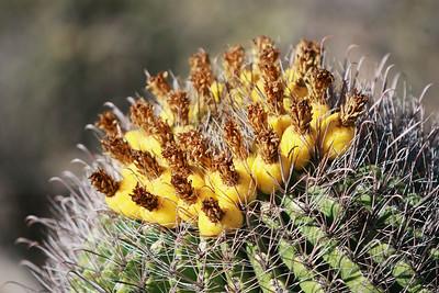 Tucson-20121211-013