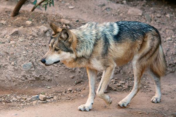 Tucson-20121211-032