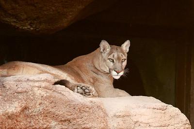 Tucson-20121211-029