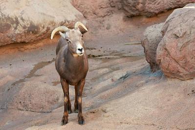 Tucson-20121211-017