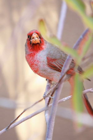 Tucson-20121211-009