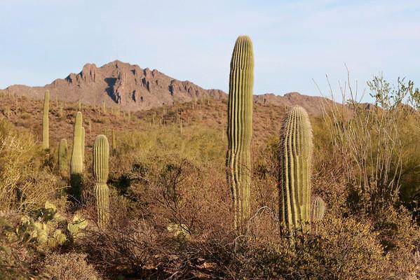 Tucson-20121211-041
