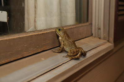 2013-07-19 frog