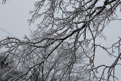 2013-12 Ice Storm