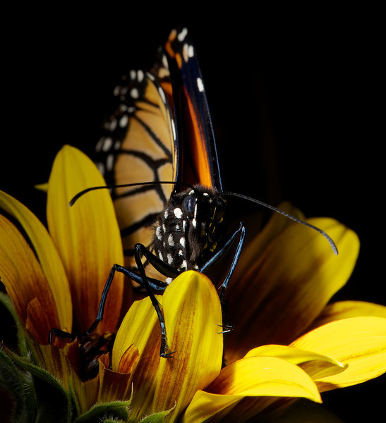 2013-03-17-Butterfly-10