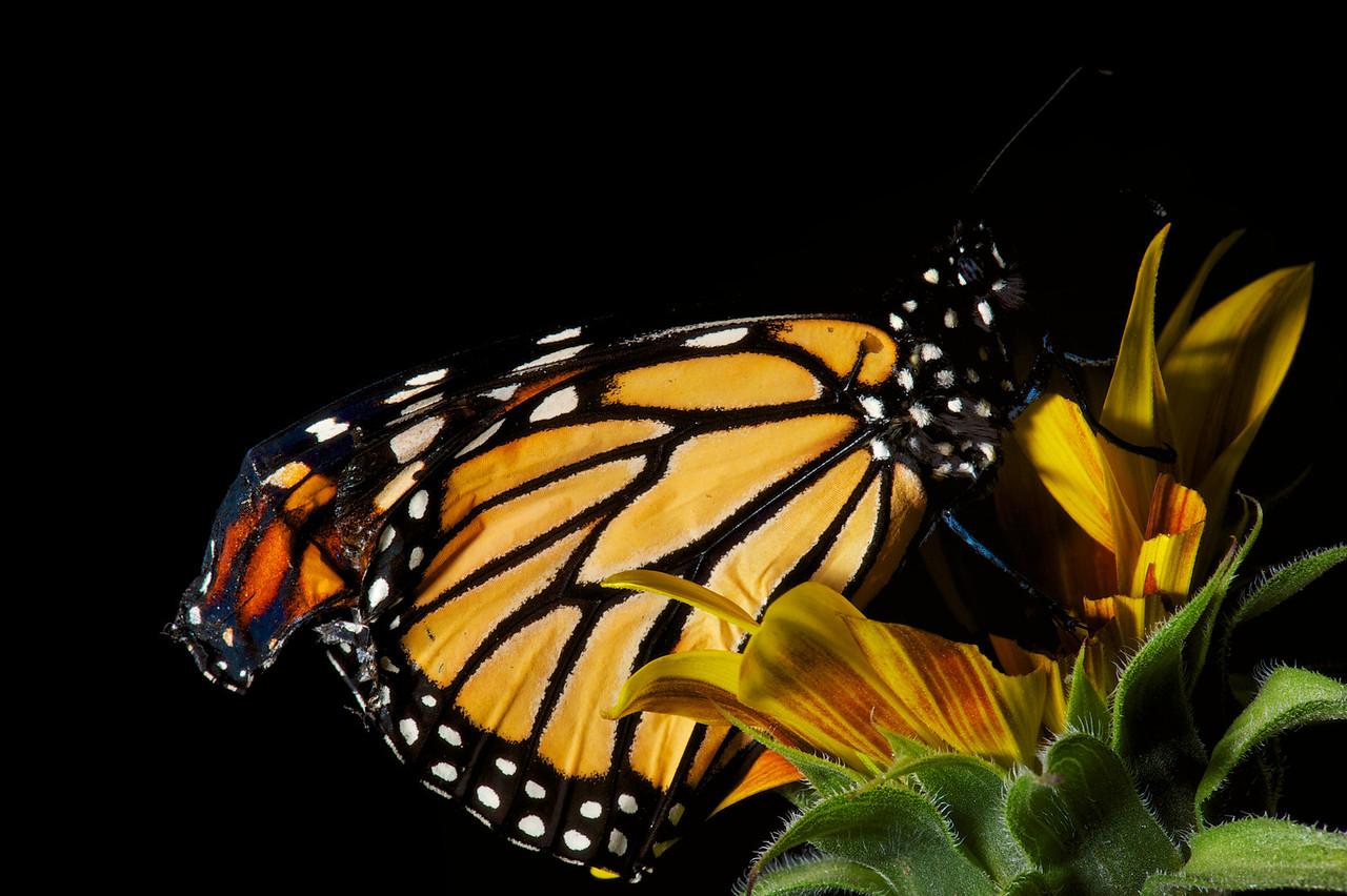2013-03-17-Butterfly-5
