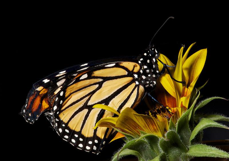 2013-03-17-Butterfly-6