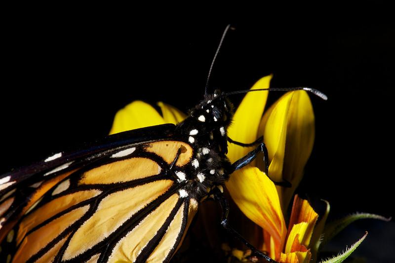 2013-03-17-Butterfly-13