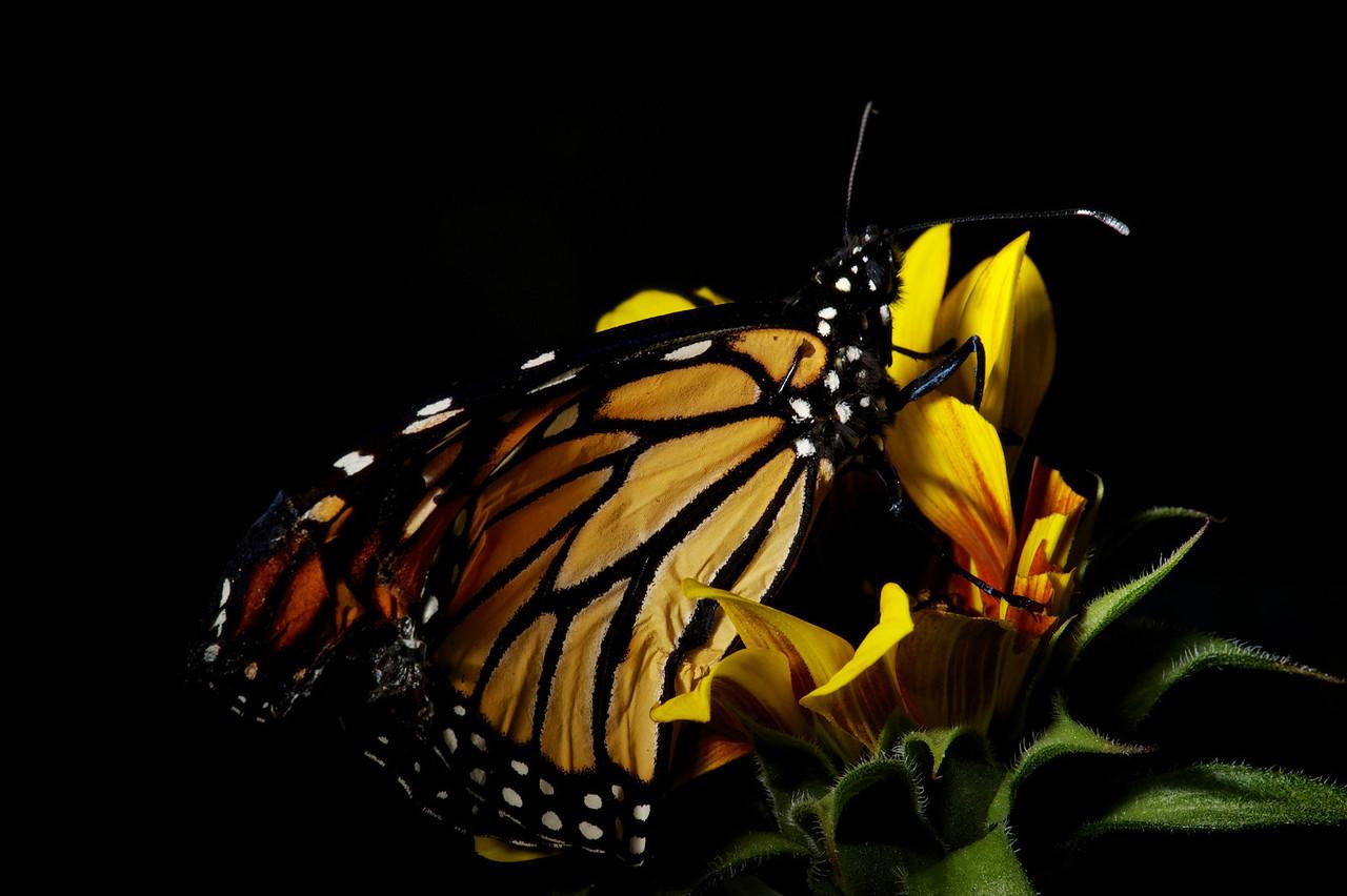 2013-03-17-Butterfly-14