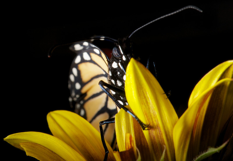 2013-03-17-Butterfly-11