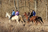 February 2, 2013 (Forest 44 Conservation Area [horse trail] / Fenton, Saint Louis County, Missouri) -- Women riding horses