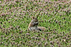 April 9, 2013 (Tower Grove Park [Gaddy Garden] / Saint Louis City, Missouri) -- Squirrel