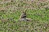 April 9, 2013 (Tower Grove Park [Gaddy Garden] / Saint Louis City, Missouri) -- Squirrel