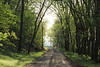 April 20, 2013 (White Rock Nature Preserve [entrance road] / Valmeyer, Monroe County, Illinois) -- Entrance
