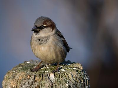 2013 Bird Photos