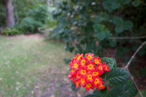 2013 Fairchild Tropical Botanic Garden