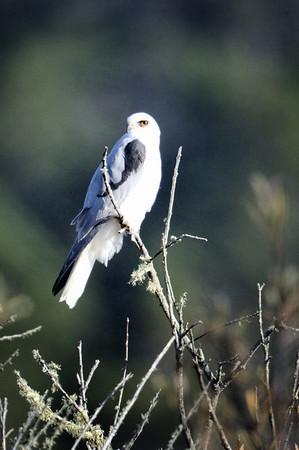 2013_Sea_Ranch_bird_count