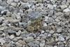 Toad @ Columbia Bottom CA