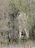 Lime Kiln ruins @ Rockwoods Reservation