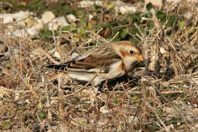 2014 Bird (4) - Oct-Dec