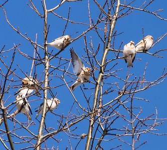 2014 Birds in New York