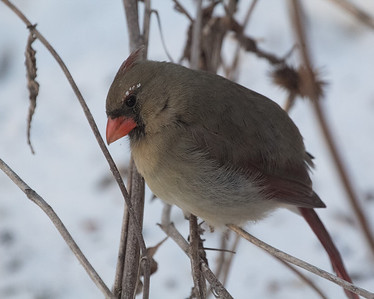 2014 Jan Yard Birds Freezing Day