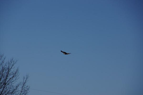 2014 Mississinewa Eagles