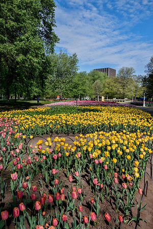 Tulips_DowsLake_0016tnad