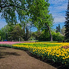 Tulips_Dowslake_0191tnd