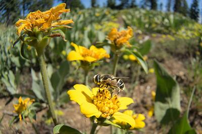 2014 SFSU  Insect Course