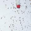 Critters (caddisflies, moths, beetles, flies, mayflies,...) on a blacklighted sheet