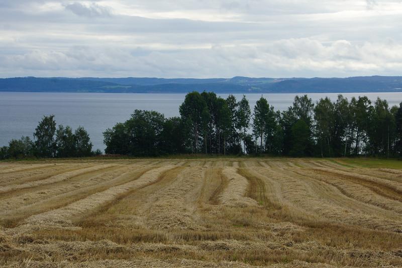 Besök Tivedens nationalpark i samband med Mariestads maraton, augusti 2014. Bilder före är från Vättern, bilder efter från tallskog utanför Tidaholm.