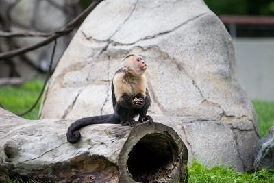 FW Zoo 20150516-0012
