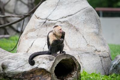 FW Zoo 20150516-0014
