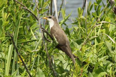 2015 Bird (2) - Apr-Jun