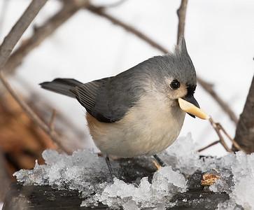 2015 Birds in NY