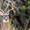 Deer...Austin, Texas...Thanksgiving day