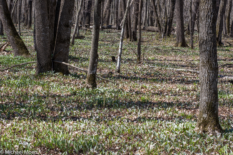Trout Lilly Scene
