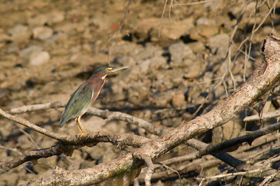 0822-birds-3104