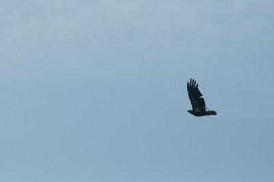 0823-birds-3108