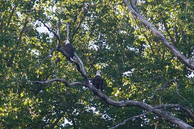 birds-aug22-3076