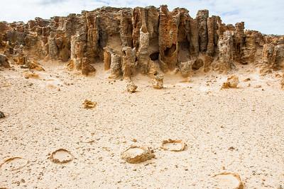 Petrified Forest on the lime stone coast
