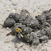 "Bee in the Poop @ ""Mount Doom"""