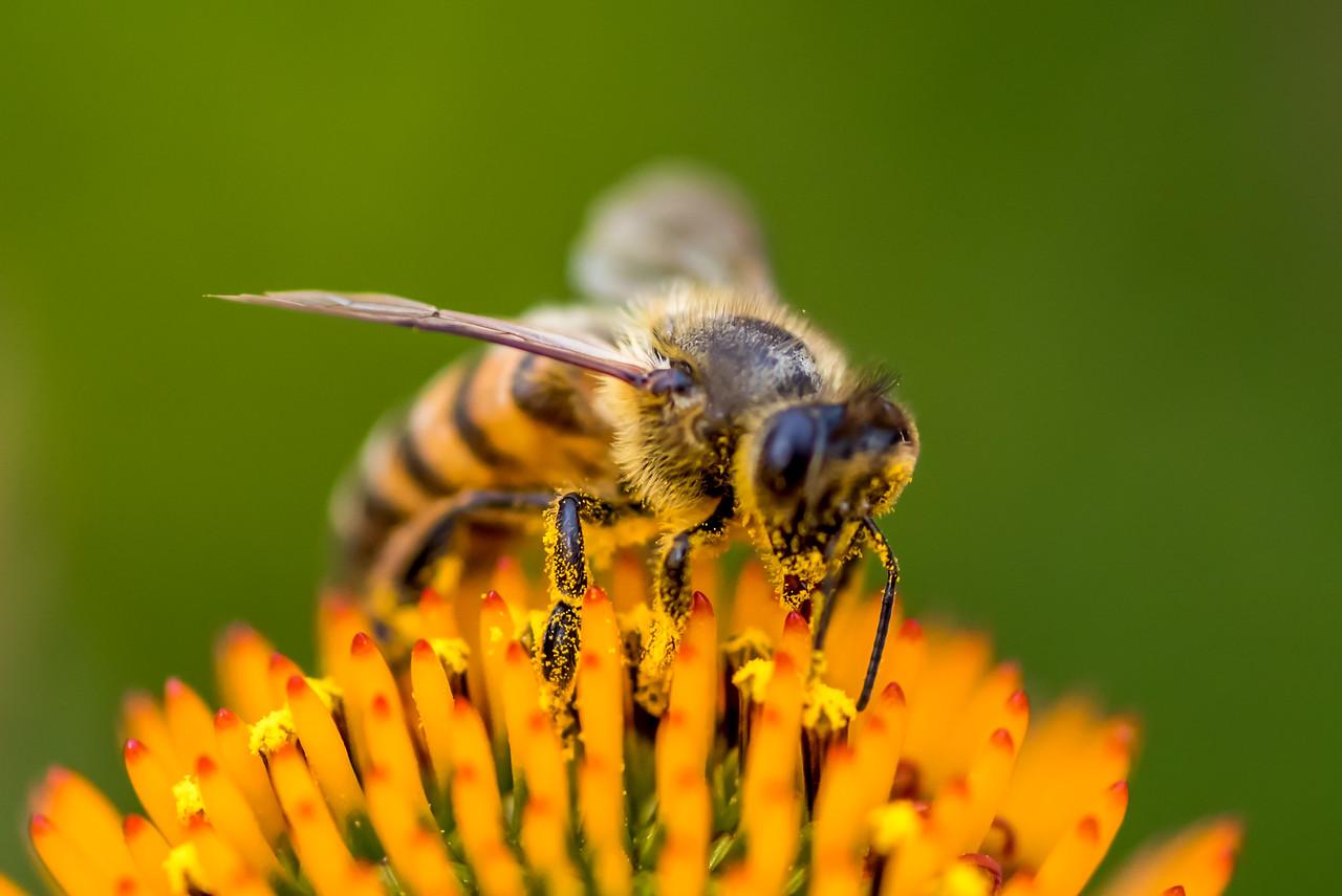 Bee...May 14,2016